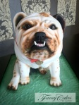 Bulldog cake with teeth